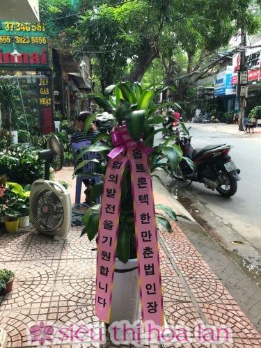 Cây thiết mộc lan- cây quà tặng khai trương đẹp