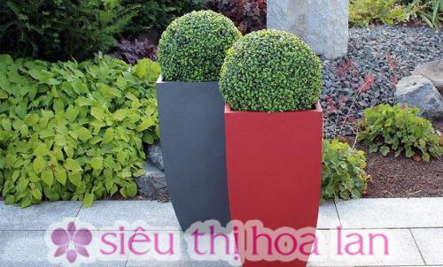 Chậu composite trồng cây có nhiều màu sắc